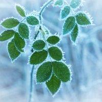 Шедевры зимы :: Swetlana V