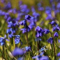 Весна творит её из дымчатых фантазий :: Татьянка *