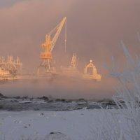 Морозный день. :: Владимир Стаценко