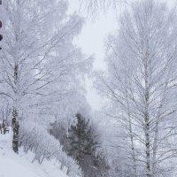 Волшебство зимы :: Андрей Костров
