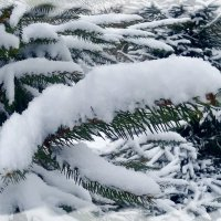 Снег в конце января. :: Чария Зоя