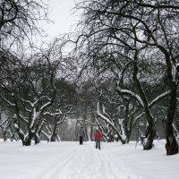 Лыжню ... :: Лариса Корженевская