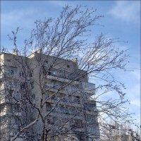 Деревья прекрасны в любую погоду :: Нина Корешкова