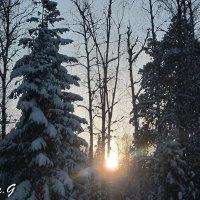 В зимнем лесу :: OLLES