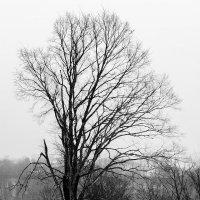 Дерево )) :: Алексей le6681 Соколов