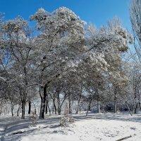 Зима 2018. Фото№1 :: Владимир Бровко