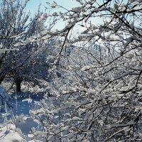 Зима-2018 Фото №5 :: Владимир Бровко