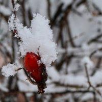 Зима :: Натали