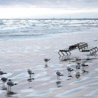 Ветер с моря :: Александр Михайлов