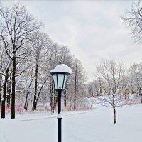 безлюдно в зимнем парке :: Елена