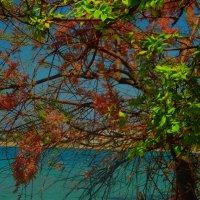 архивное фото бухты Омега Севастополь :: Роза Бара