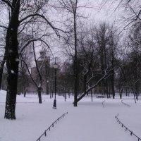 Аллея в зимнем парке. (Санкт-Петербург). :: Светлана Калмыкова