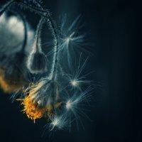 Без страха перед тьмой .. :: Ирина Сивовол