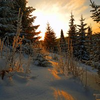 зимняя тишина :: леонид логинов
