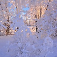 Волшебница-Зима :: Геннадий Ячменев