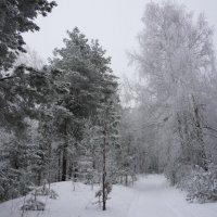 Морозный январь :: Ольга