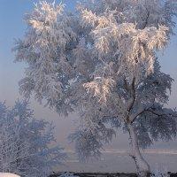 В морозный день. :: Владимир Стаценко
