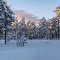 прекрасен лес в лучах заката... :: Татьяна .