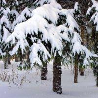 Дождались зимы и мы! ) :: Валентина ツ ღ✿ღ