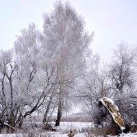 Настоящий зимний день! :: Михаил Столяров