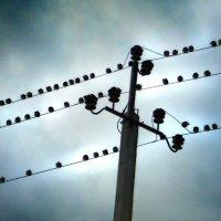птички задом к нам сидели :: Андрей Каманин