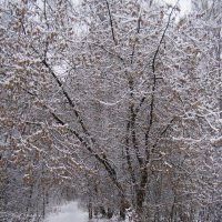 Зима! :: Анна Воробьева