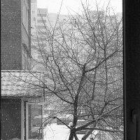 falling snow :: Юлия Денискина