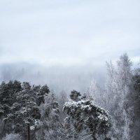 Дремучий лес снежного царства.. :: Лилия .