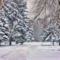 Зима пришла неторопливо... :: Валентина ツ ღ✿ღ
