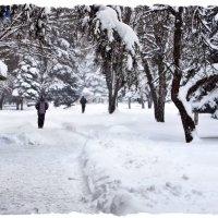 Пришла зима бодрящая, звенящая, хрустящая, настоящая! :: Валентина ツ ღ✿ღ