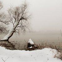 Утро туманное... :: Natali D