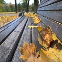 Осень :: Алексей Мясищев