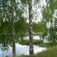 Берёзки у реки :: Самохвалова Зинаида