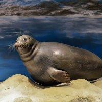 В океанариуме во Владивостоке. :: Виктор Иванович