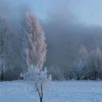 Морозное утро. :: Ирина Королева
