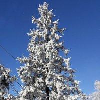 Курский, зимний день :: Galina Belugina