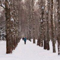 По заснеженным аллеям парка :: Татьяна Ломтева