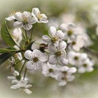 Весна среди зимы. :: Тамара Бучарская