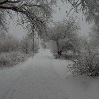 zima :: Jerzy Hermanowicz