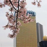 Сакура паркa Сумида Токио :: Swetlana V