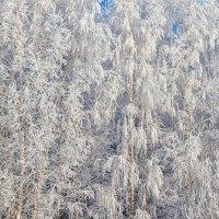 Зимняя прогулка :: Юрий Захаров