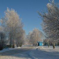 Морозное утро. :: владимир ковалев