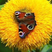 На цветке :: Александр Михайлов