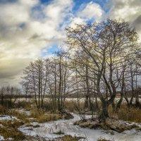 Берег озера :: Сергей Цветков