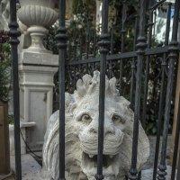 Venezia.Isola Lido di Venezia. :: Игорь Олегович Кравченко