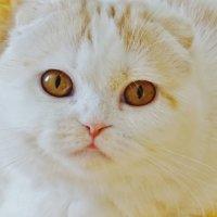 Солнечная кошечка Ася :: Мishka 298