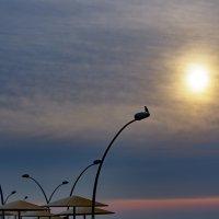 На закате :: Alex Molodetsky