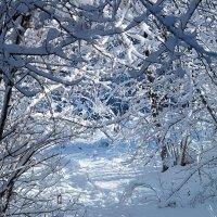 Зимний калейдоскоп! :: Наталья