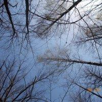 лес на фоне неба :: Светлана Рябова