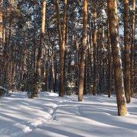 Звонкое затишье января... :: Лесо-Вед (Баранов)